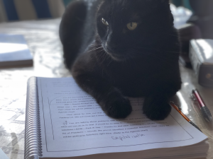 Moko the Editor Cat